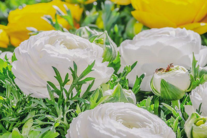 Urodziny Tesciowej Jakie Kwiaty Wybrac Do Bukietu Radosny Dom